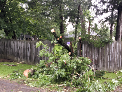 The storm knocked down trees throughout Demopolis including this one on Dogwood Drive.