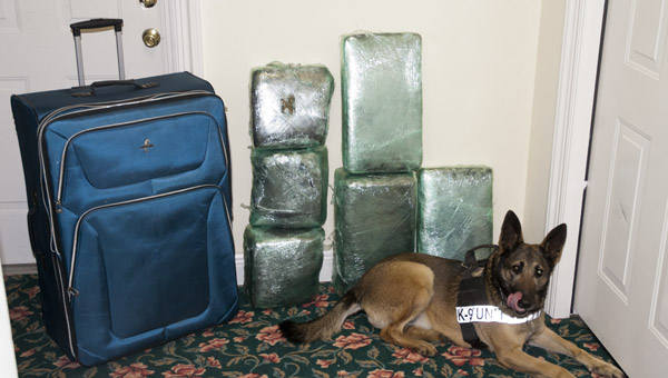 The 17th Judicial Drug Task Force, along with their K-9 Suza (shown), seized 67 pounds of marijuana during a traffic stop on Interstate 20/59.