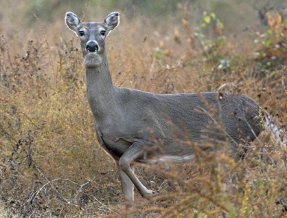 First South Farm Credit is sponsoring a big doe contest to be held on Saturday, Jan. 25.