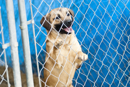 Bigbee Humane Society stays at its capacity of 54 dogs almost all the time.