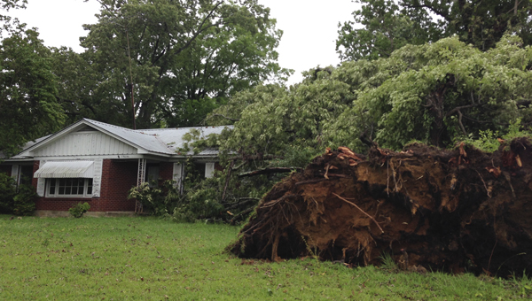 A tree fell on a house on Lake Lane in Demopolis during Monday's storms.