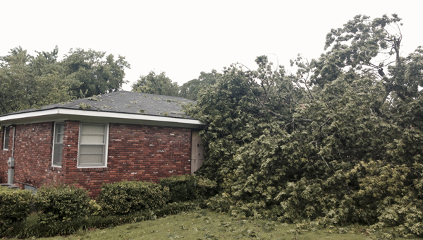 Two trees fell on this home on Herbert Street.