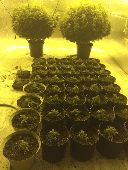 Indoor marijuana operations can produce plants year-round and produce high quality plants.